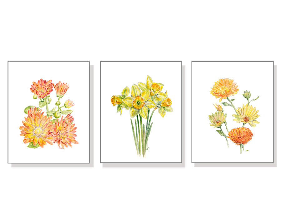 Coreopsis clipart #5, Download drawings