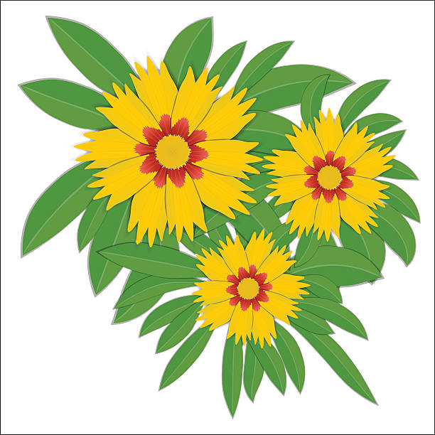 Coreopsis clipart #19, Download drawings