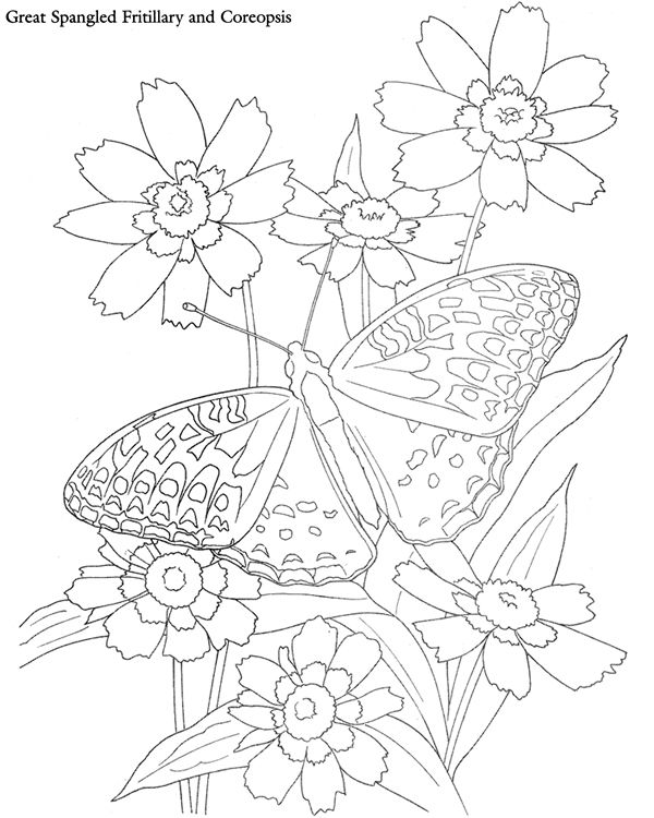 Coreopsis coloring #15, Download drawings
