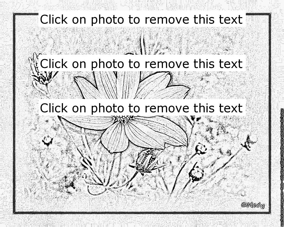 Coreopsis coloring #19, Download drawings