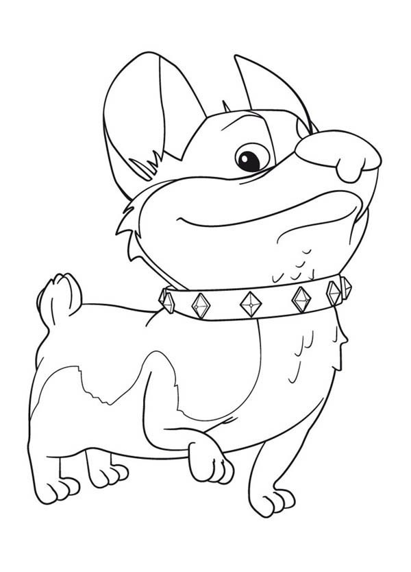 Corgi  coloring #8, Download drawings