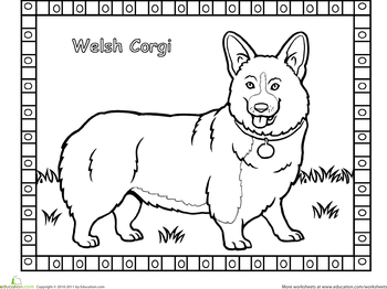 Corgi  coloring #2, Download drawings