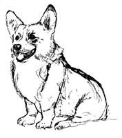 Corgi  coloring #11, Download drawings