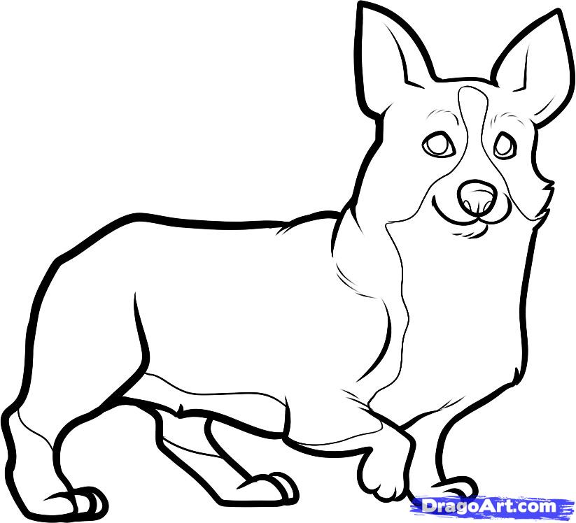 Corgi  coloring #4, Download drawings