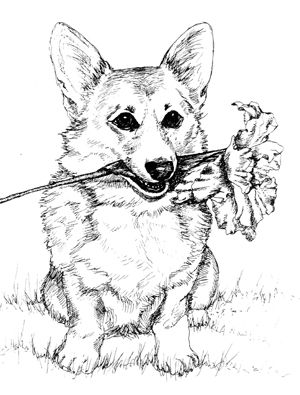 Corgi  coloring #3, Download drawings