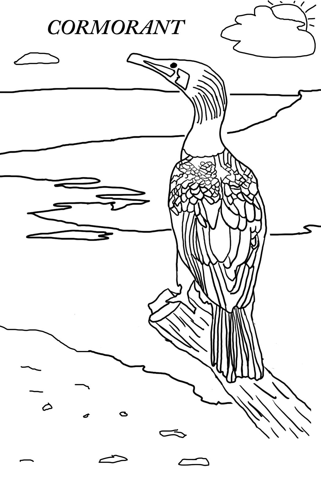 Cormorant coloring #1, Download drawings