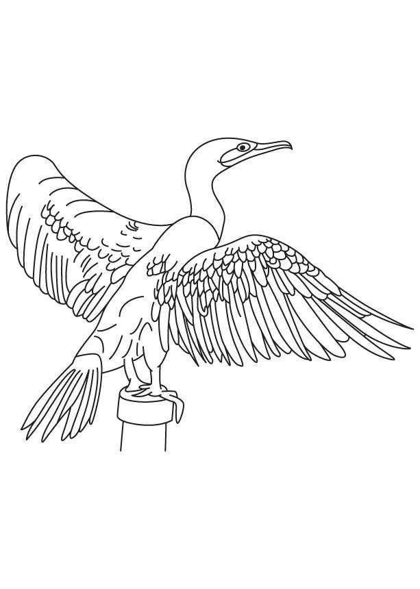 Cormorant coloring #20, Download drawings