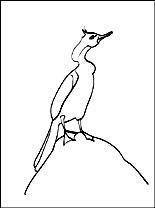 Cormorant coloring #2, Download drawings