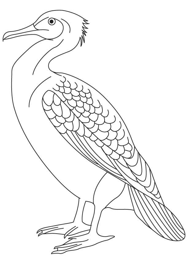 Cormorant coloring #19, Download drawings