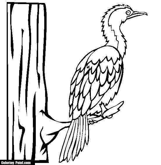 Cormorant coloring #7, Download drawings