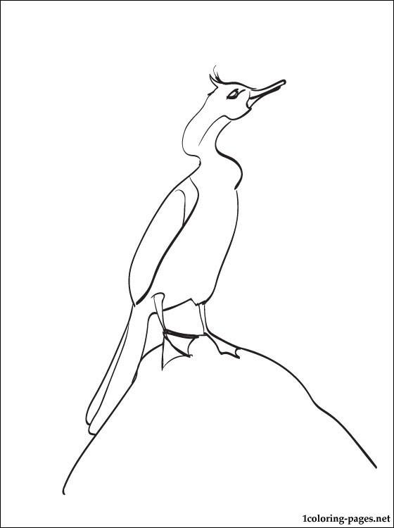 Cormorant coloring #10, Download drawings