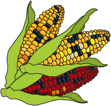 Corn clipart #6, Download drawings