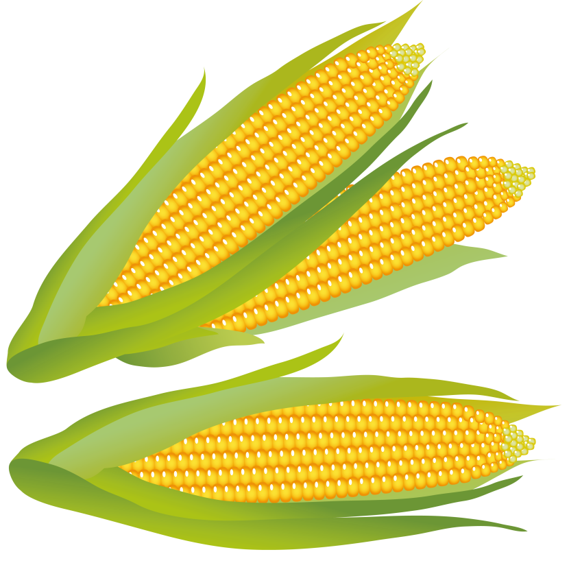 Corn clipart #16, Download drawings