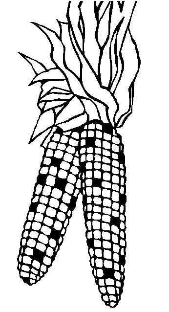 Corn coloring #8, Download drawings