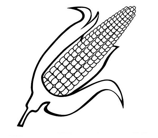 Corn coloring #15, Download drawings