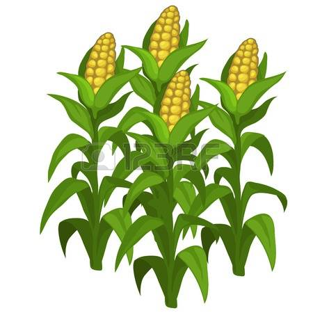 Cornfield clipart #12, Download drawings