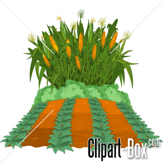 Cornfield clipart #2, Download drawings