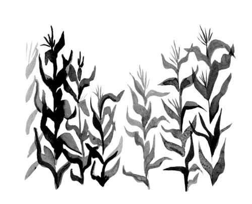 Cornfield coloring #7, Download drawings