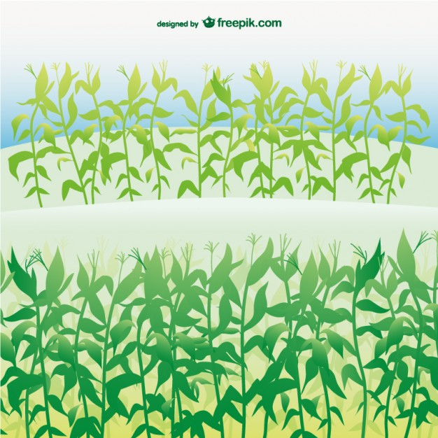 Cornfield svg #16, Download drawings