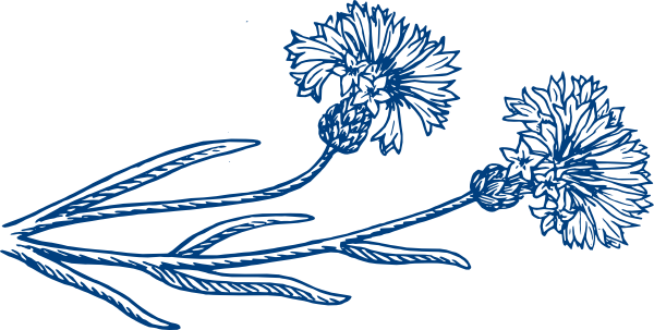 Cornflower clipart #2, Download drawings