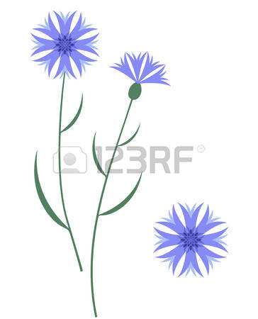 Cornflower clipart #11, Download drawings
