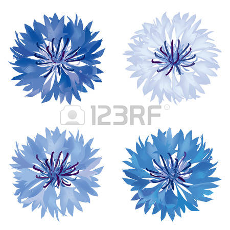 Cornflower clipart #8, Download drawings