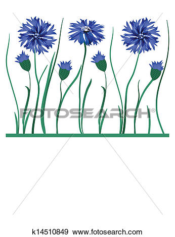 Cornflower clipart #5, Download drawings