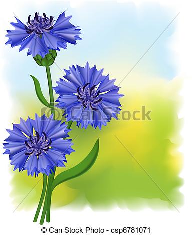 Cornflower clipart #18, Download drawings