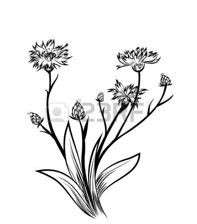 Cornflower clipart #6, Download drawings