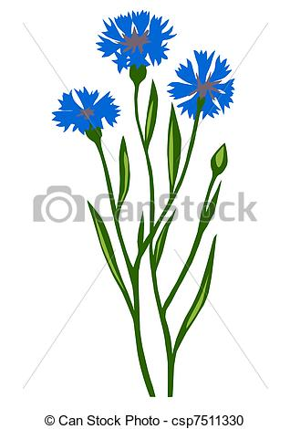 Cornflower clipart #17, Download drawings