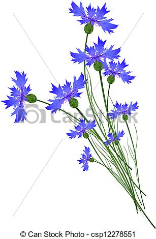 Cornflower clipart #16, Download drawings