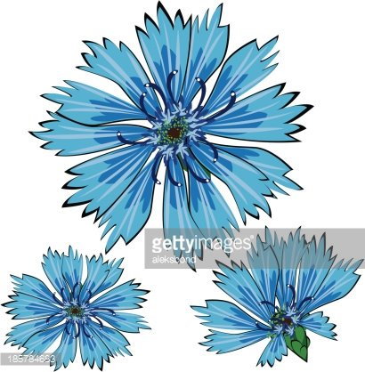 Cornflower clipart #1, Download drawings