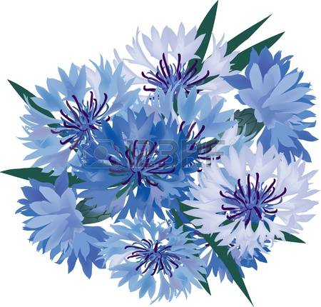 Cornflower clipart #14, Download drawings
