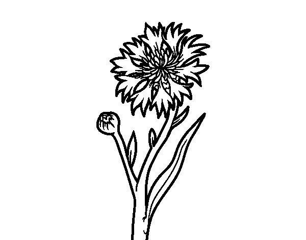Cornflower coloring #4, Download drawings