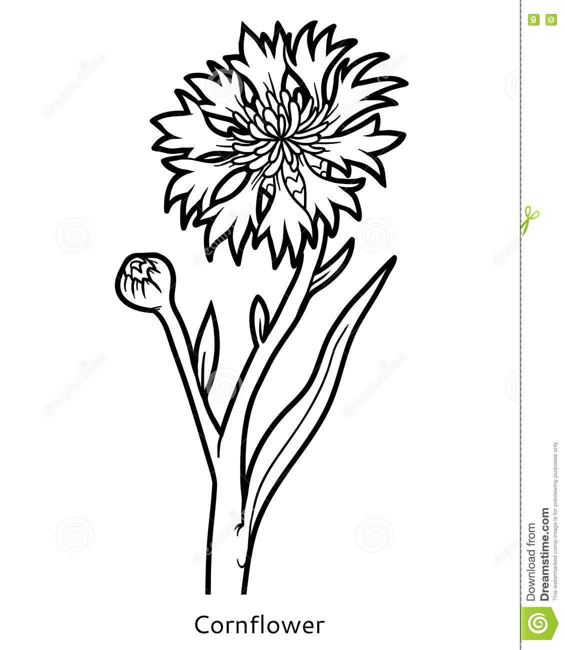 Cornflower coloring #14, Download drawings