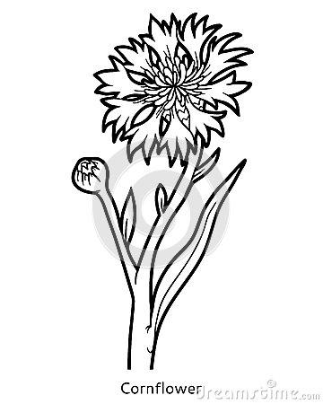 Cornflower coloring #13, Download drawings