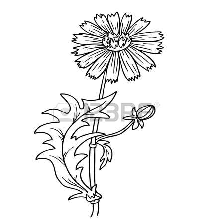 Cornflower coloring #1, Download drawings