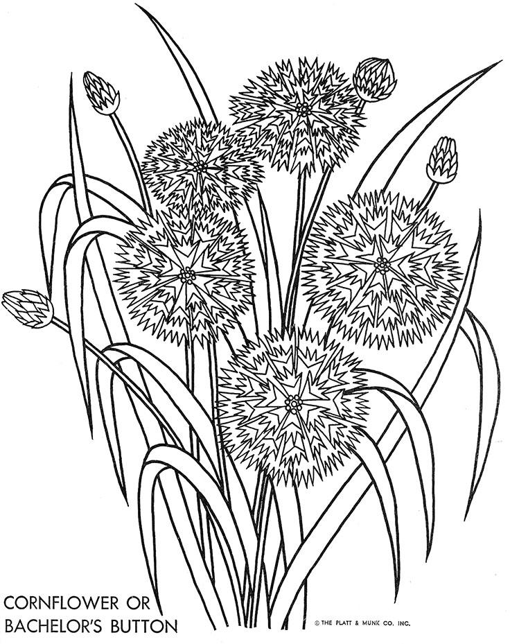Cornflower coloring #6, Download drawings