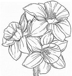 Cornflower coloring #2, Download drawings