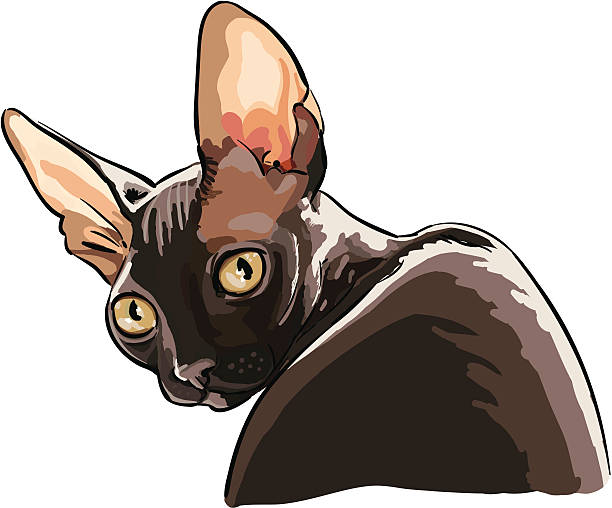 Cornish Rex clipart #14, Download drawings
