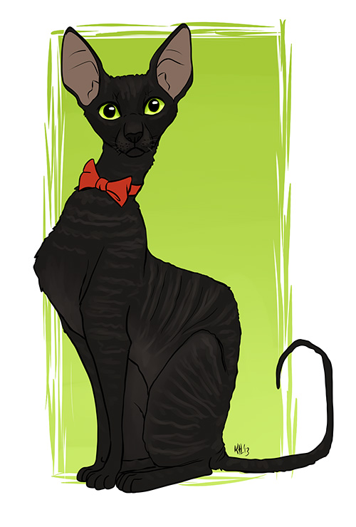 Cornish Rex clipart #11, Download drawings