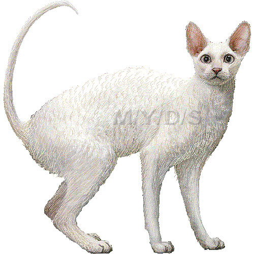 Cornish Rex clipart #2, Download drawings