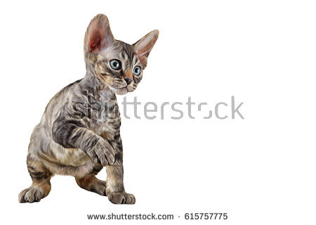 Cornish Rex clipart #15, Download drawings