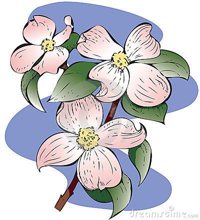 Cornus Blossom clipart #14, Download drawings