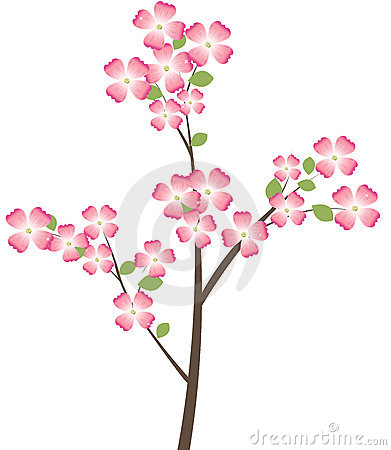 Cornus Blossom clipart #7, Download drawings