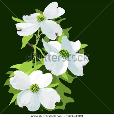 Cornus Blossom clipart #18, Download drawings