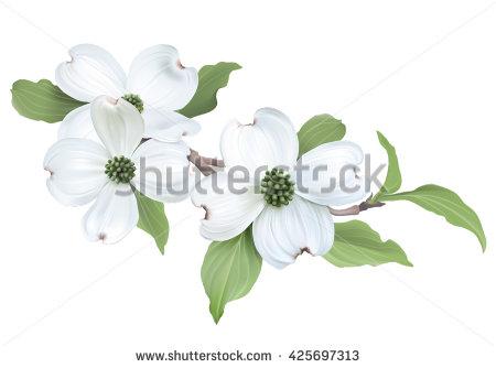 Cornus Blossom clipart #16, Download drawings