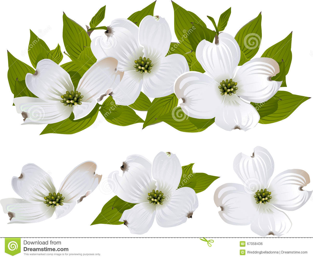 Cornus Blossom clipart #15, Download drawings
