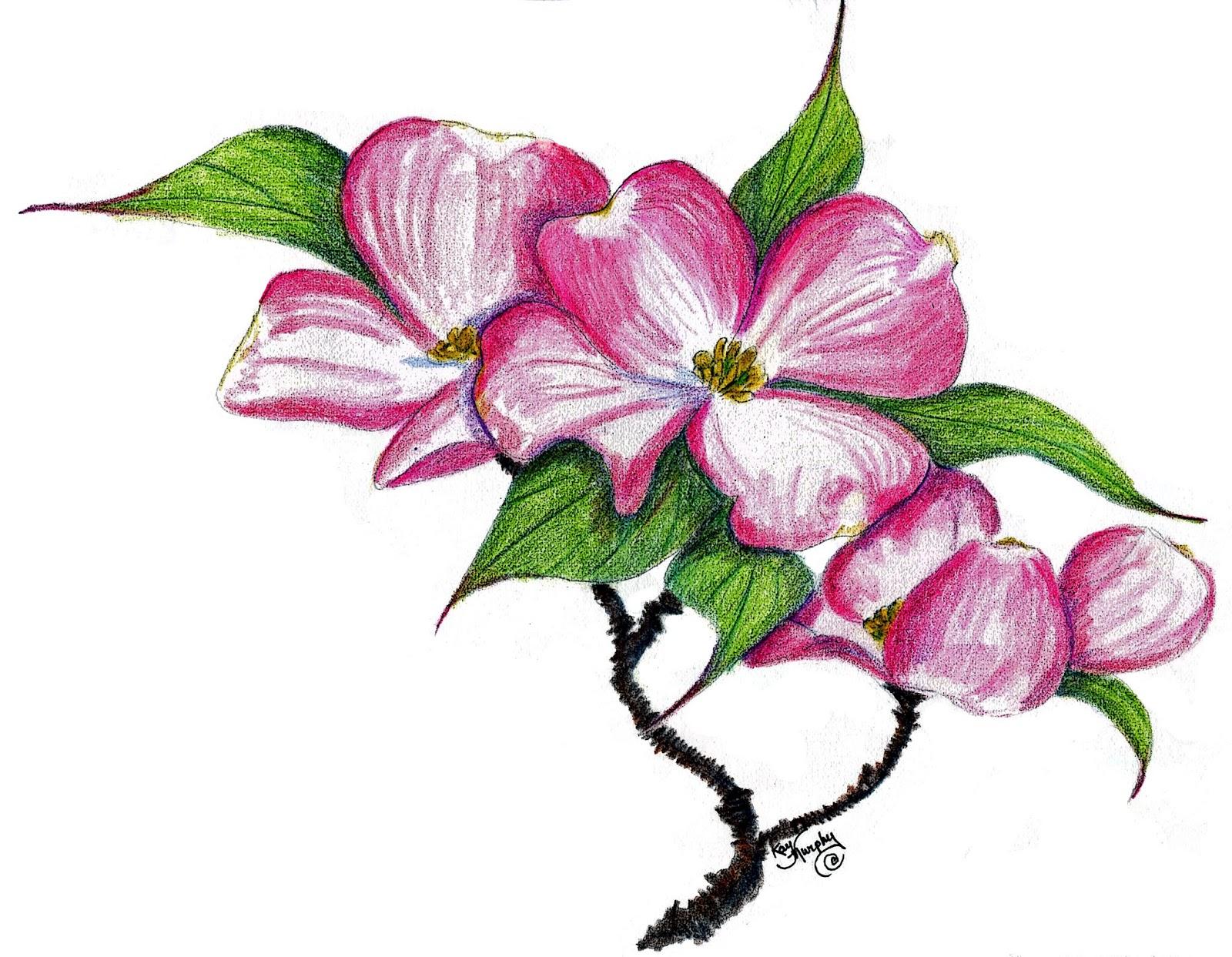 Cornus Blossom clipart #6, Download drawings