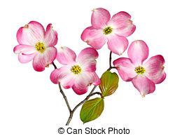 Cornus Blossom clipart #19, Download drawings